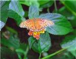 Mini-Flower Butterfly
