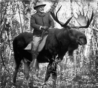 Teddy on A Bull Moose