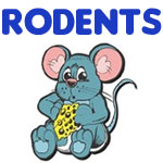 Pet Rodent Designs