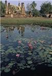 Buddist Lotus Garden #2