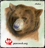 Pastel Drawing-Arthur the Bear-Adult Clothing