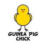 Guinea Pig Chick