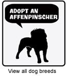Adopt a Dog Breed