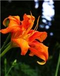 Flower/Plant Photo Items