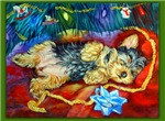 Yorkshire Terrier Santa Dreams