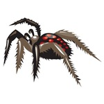 Tarantula T-shirts and Gifts