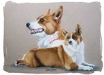 Red welsh Corgi
