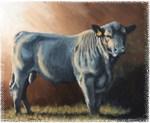 Black Angus Bull.