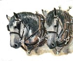 Team of percherons, Gray