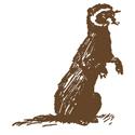 Hand Drawn Ferret