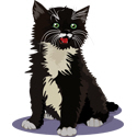 Black Kitten T-shirt