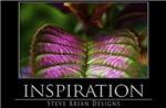 INSPIRATION8
