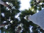 Miami Palm Trees
