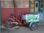 Margaritaville Bike (New Orleans, LA)