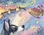 Husky sleigh dogs
