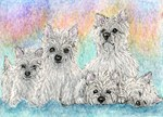 A warmth of westies