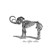 Minor Oliphant Skeleton