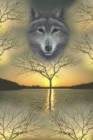 Wolf, 'Shaman's Dream' by Marc Brinkerhoff