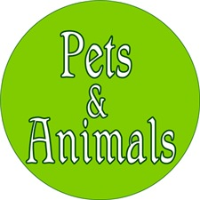 <b>PETS and ANIMALS</b>