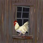 Rooster in the Window