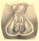 anus anatomy