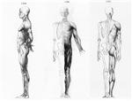 full body anatomy