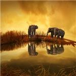 Stunning Elephant Photograph
