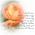 Peach Rose Poetry