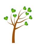 Heart Leaf Tree