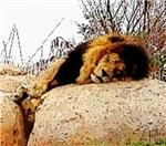 The King Sleeps, Photo / Digital Painting