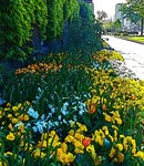 Flowers that Shine, Photo / Digital Painting