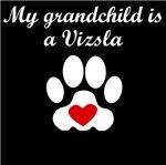 Vizsla Grandchild
