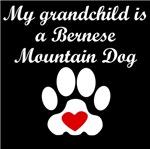Bernese Mountain Dog Grandchild