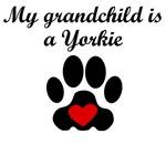 Yorkie Grandchild