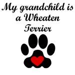 Wheaten Terrier Grandchild