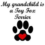 Toy Fox Terrier Grandchild