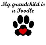 Poodle Grandchild