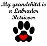 Labrador Retriever Grandchild