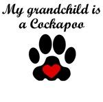 Cockapoo Grandchild