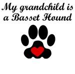 Basset Hound Grandchild