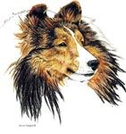Shetland Sheepdog Sable Sheltie Unique Gifts Items