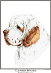 Clumber Spaniel Open Edition Products & Gifts