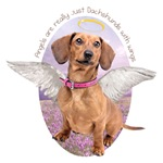 Angels are Dachshunds with wings.