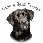 Man's Best Friend - Labrador