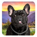 French Bulldog Meadow