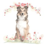 Sheltie Flowers