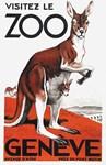 Kangaroo, Zoo