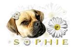Sophia Puggle