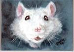 White Rat--Who Me?