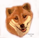 Shiba Inu